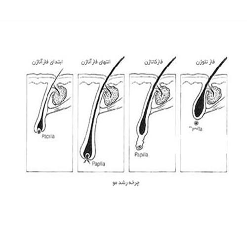 مراحل-رویش-مو-پس-از-کاشت-مو