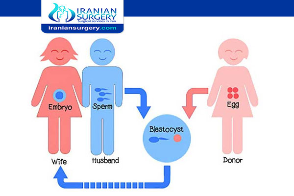 How many days after period is frozen embryo transfer?