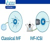 What is the success rate of ICSI IVF?