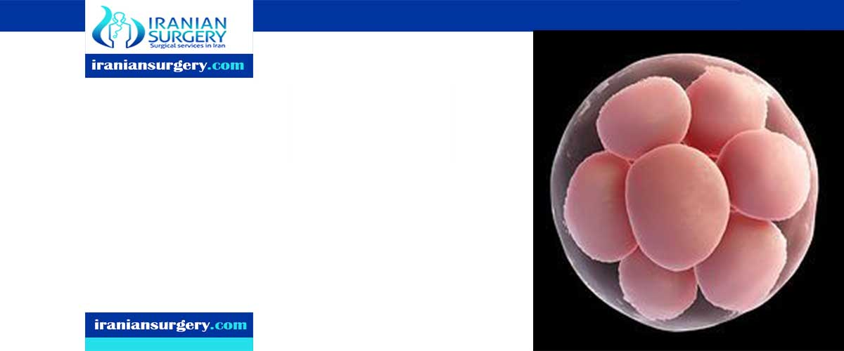 In vitro maturation success rates