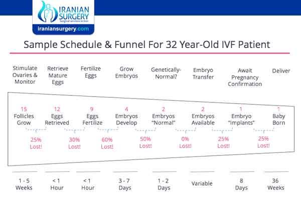 Ivf process timeline
