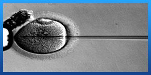 Low Sperm Count